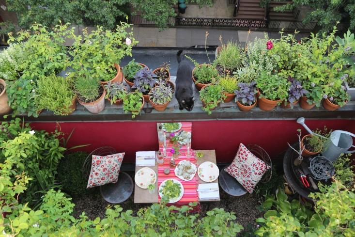 Grădina de pe balcon. Sfaturi şi idei  FOTO