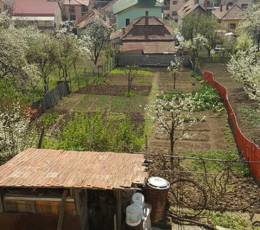 Casa veche cu 780 mp teren, cartierul Dambul Rotund