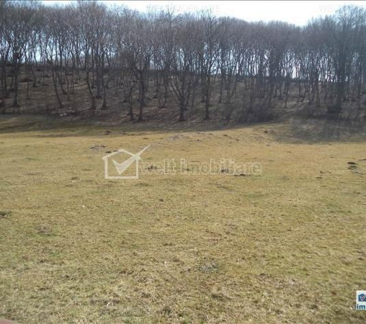 Teren de vanzare in Floresti, zona Tauti, 5800 mp - imagine 1