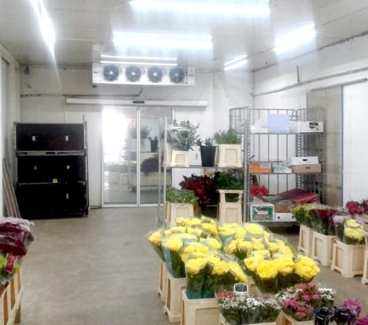 2 Hale frigorifice + showroom + apartament , 1625 mp, in Pacurari  Valea Lupului - imagine 1