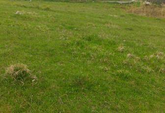 Teren de vanzare, intravilan, 1000 mp, front 17,5 m, zona Valea Fanatelor