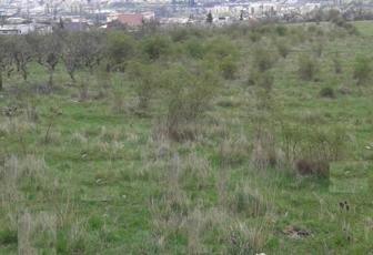 Vanzare teren intravilan in zona rezidentiala in  Dambul Rotund